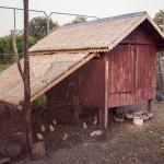 construire poulailler bois
